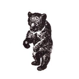 Bär 01
