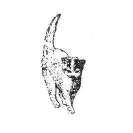 Katze 05